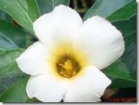 bunga mekar pagi 416