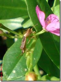 kumbang bercinta sampai puncak 2