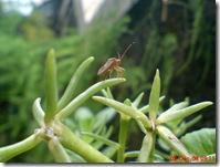 kumbang di puncak 3