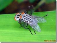 lalat bercinta 678