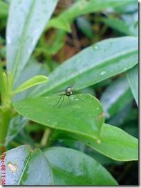 lalat kecil 2