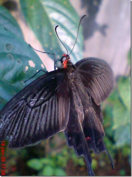 butterfly 1588