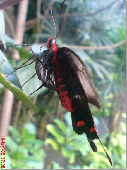 Butterfly 1589
