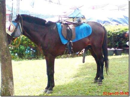 kuda di cipanas 1330