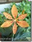 bunga 1375