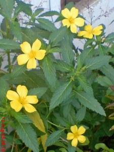 bunga pukul delapan 14_edited