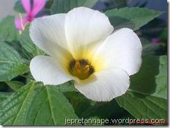 bunga pukul delapan 3474
