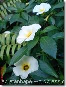 bunga pukul depalan 094