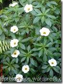 bunga pukul depalan