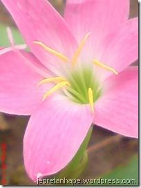 bunga rumput 2674