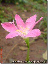 bunga rumput 2680