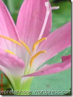 bunga rumput 2681
