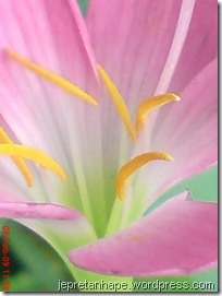 bunga rumput 2684