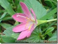 bunga rumput 2687