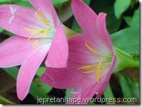 bunga rumput 2693