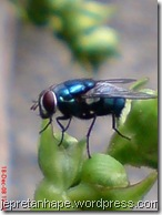 lalat 667