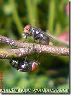lalat-lalat 2545