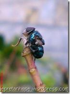 lalat mati di ujung dahan 785