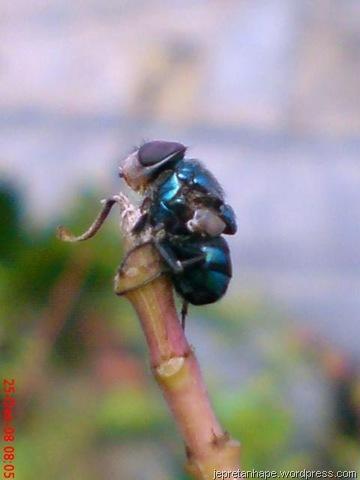 http://jepretanhape.files.wordpress.com/2009/02/lalat-mati-di-ujung-dahan-7851.jpg