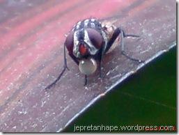 lalat muntah 2121