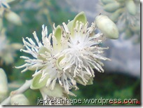 bunga palem 2853