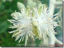 bunga palem 2854