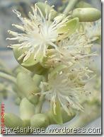 bunga palem 2855