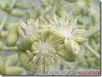 bunga palem 2856