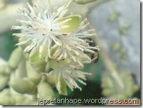 bunga palem 2857