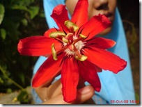 bunga di kandang monyet 45