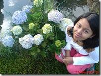 bunga cantiku 01