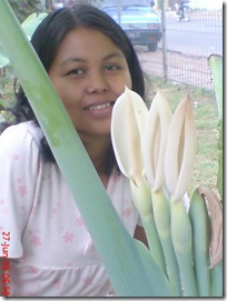 bunga keladi 07