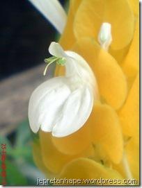 bunga lilin 3454