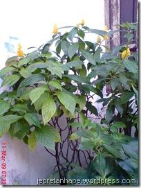 bunga lilin 3871