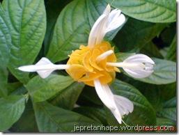 bunga lilin 3874