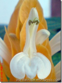 bunga lilin 3883