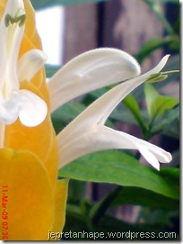 bunga lilin 3884