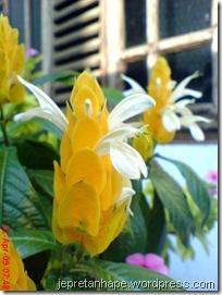 bunga lilin 4576