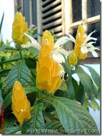 bunga lilin 4577
