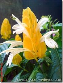 bunga lilin 4581