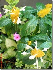 bunga lilin 4585