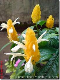 bunga lilin 4586