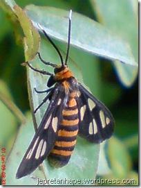 serangga 1142