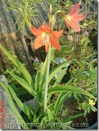 bunga cantik warna oranye 02