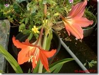 bunga cantik warna oranye 20