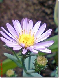 bunga cantik ungu 01
