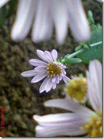 bunga cantik ungu 05