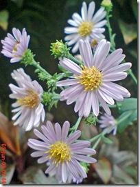 bunga cantik ungu 16