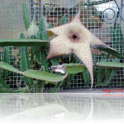 bunga kaktus di TMII 05