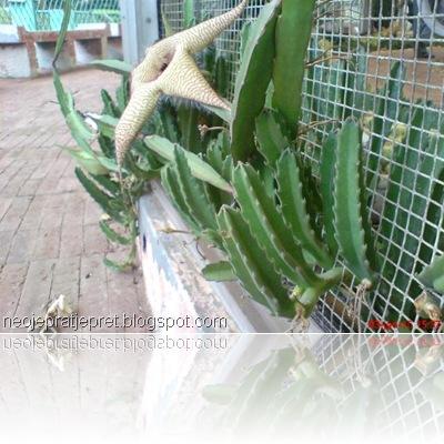bunga kaktus di TMII 07
